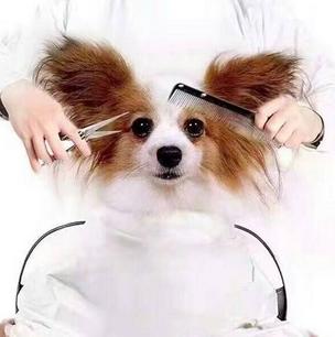 美宝屋宠物美容