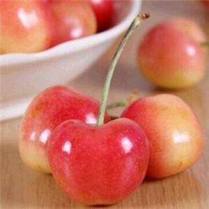 本来鲜樱桃