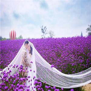 蓝朵婚纱摄影宣传