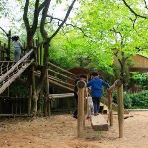 森林兒童樂園獨木橋