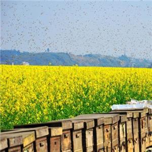 蜜珍堂蜂蜜養蜂