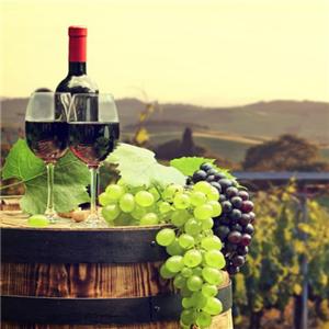 尚博龙葡萄酒酒杯