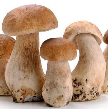 天添食用菌菇类