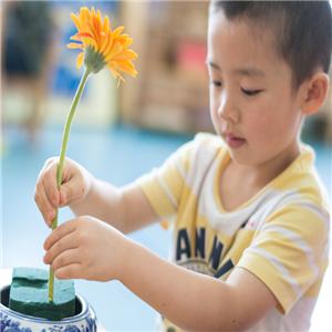 自然树幼儿园插花