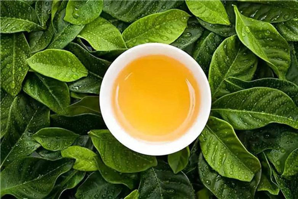 中茶世界茶园特色