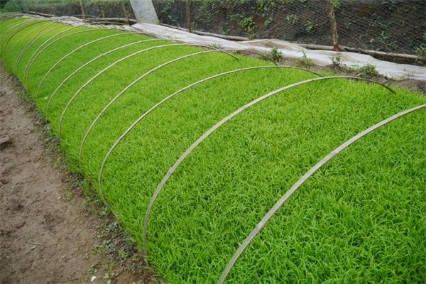 中航海环境治理绿化
