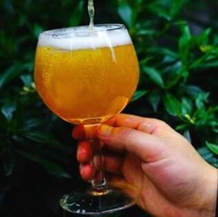 特鲁斯精酿啤酒香椿
