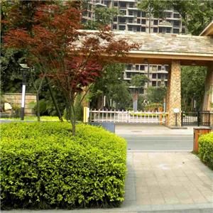 众安房产-环境优雅