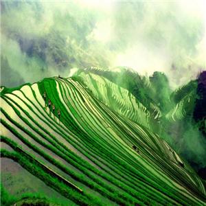 康辉国际旅行社绿地