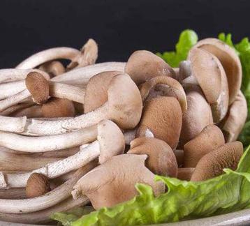 俏山城蘑菇