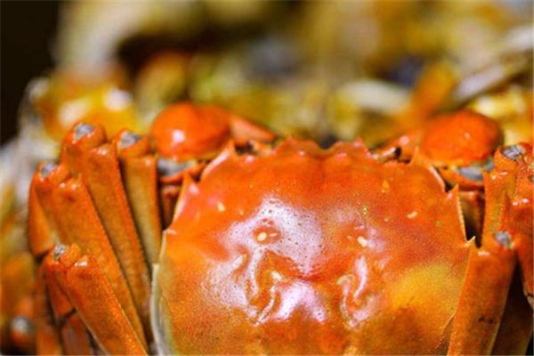 蟹束阁大闸蟹加盟