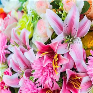 大丰花卉种植中心-清新