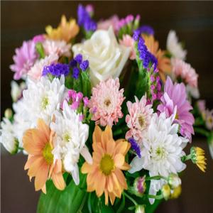 大丰花卉种植中心-多彩