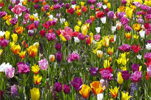 大丰花卉种植中心-好看