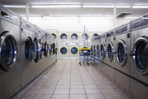 浣熊洗衣店技術很好