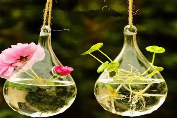 一水间水培花卉加盟怎么样靠谱吗?