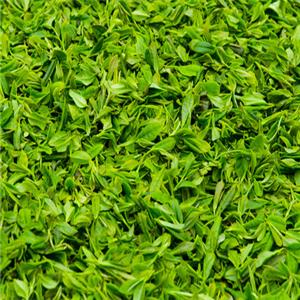 龙潭茶绿茶