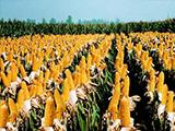 远美农业休闲食品