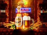 青岛品客啤酒